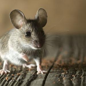 mice removal macomb county mi
