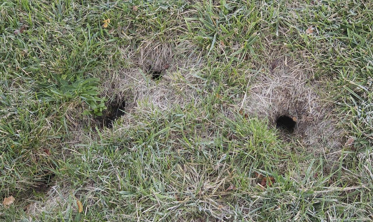 Macomb County Chipmunk Removal Cmc Animal Control